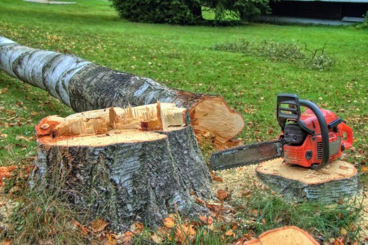 Ekstra Fældning af træer hjælper på varmeregningen - Billig Fyring EY32